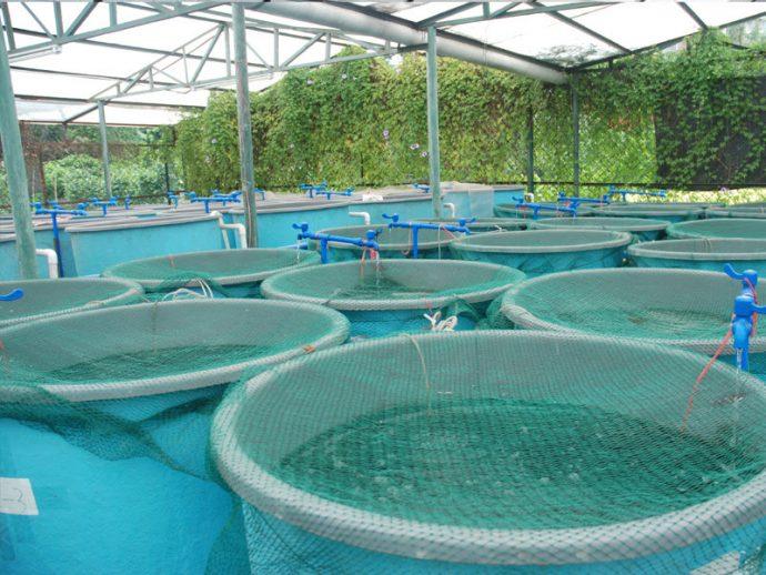 aqua En Ucuz ve En Karlı 5 Tarım Yatırımı