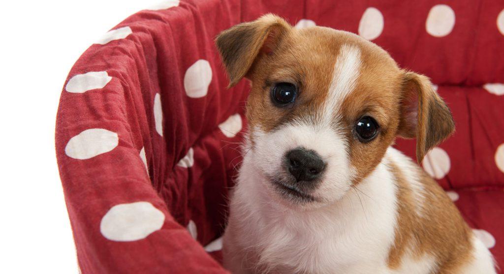 kanser-kopekler-1024x558 Köpekler İnsan Dilinden Anlar Mı?