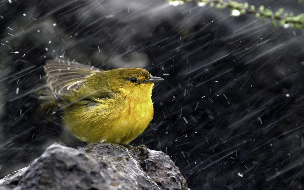 kus-ve-yagmur-1024x640 Yağmur ve Yağmurun Oluşumu