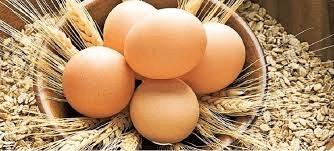 organik-yumurta