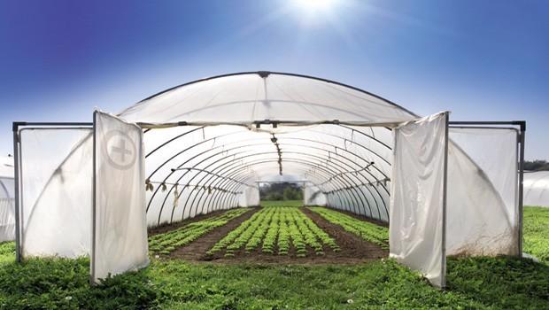 seracilik En Ucuz ve En Karlı 5 Tarım Yatırımı
