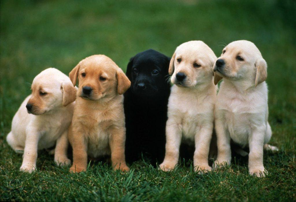 suclu-kopekler-1024x699 Köpekler İnsan Dilinden Anlar Mı?