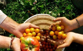 tarımda başarı sağlamak