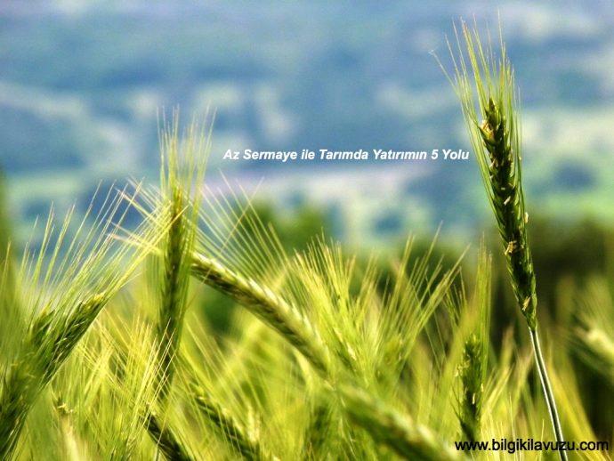 tarımda yatırım