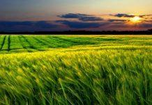 verimli tarım ürünleri
