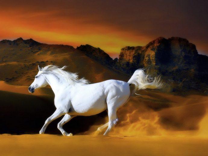 Neden atlar öldürülüyor?