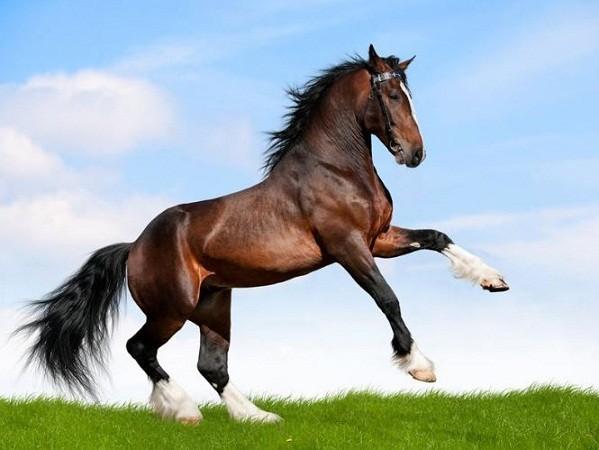 atlar-neden-olduruluyor Sakatlanan Atlar Neden Öldürülüyor?