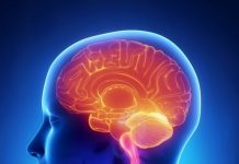 beyin-nedir-2-218x150 Bilgikılavuzu