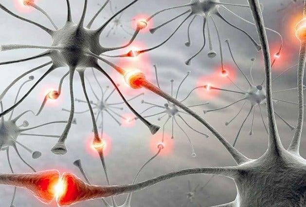 beyin nedir