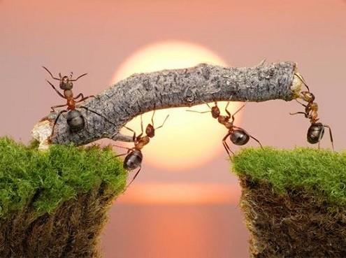karincalar-hakkinda-bilmediklerimiz-1 Karıncalar Hakkında Bilmediklerimiz