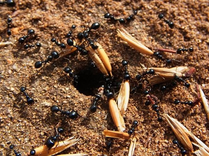 karincalar-hakkinda-bilmediklerimiz-3 Karıncalar Hakkında Bilmediklerimiz