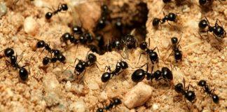 karıncalar hakkında bilmediklerimiz