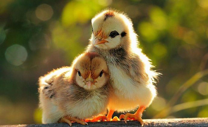 hayvanlara-bakis-acimizi-sorgulayalim-mi-2 Hayvanlara Bakış Açımızı Sorgulayalım Mı?