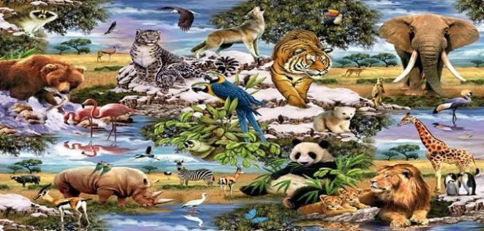 Hayvanlara Bakış Açımızı Sorgulayalım Mı?