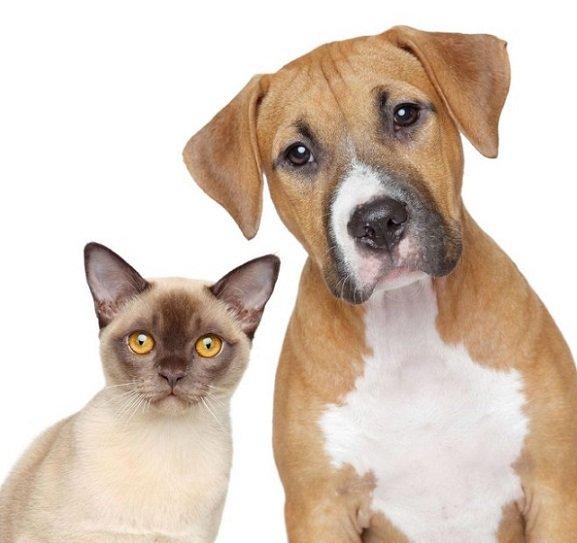 evcil-hayvanlarda-paraziter-hastaliklar-ve-insanlara-parazitlerin-bulasmasi-1 Evcil Hayvanlarda Paraziter Hastalıklar Ve İnsanlara Parazitlerin Bulaşması