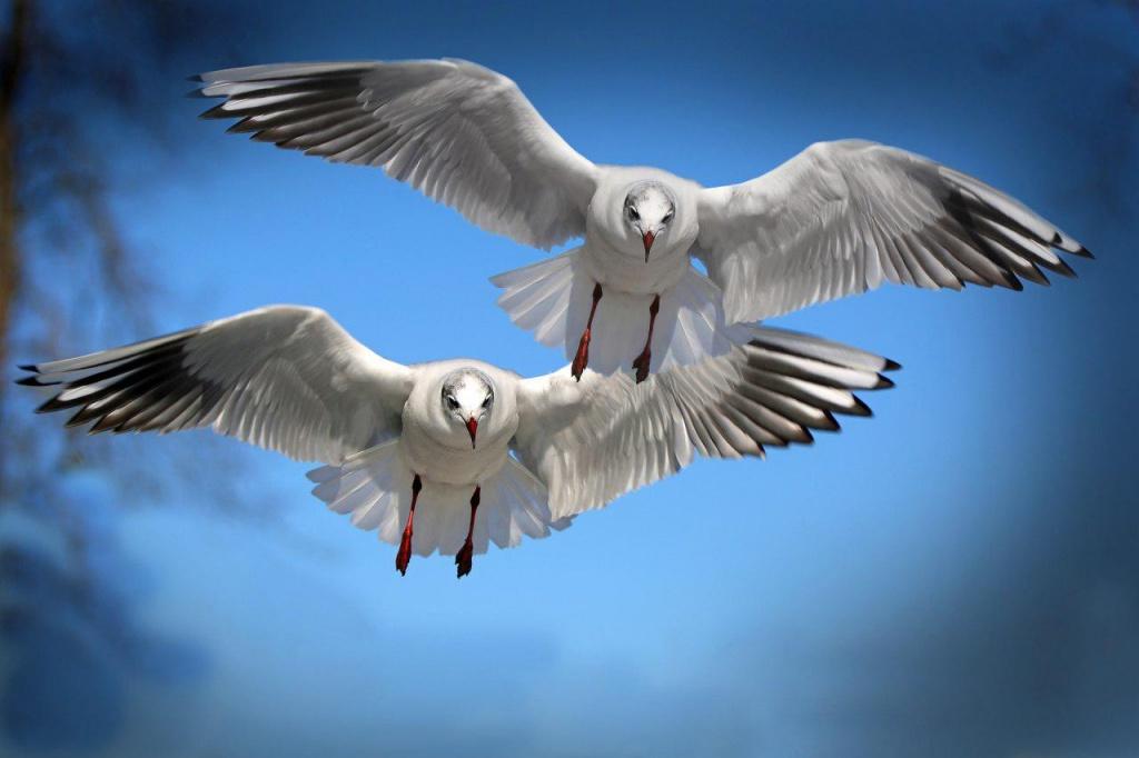 Uçamayan Kuş Türleri
