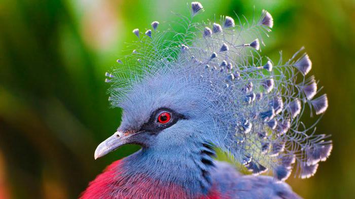 Uçamayan Kuş