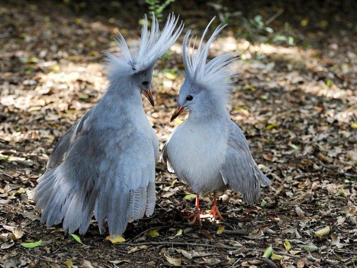 Uçamayan Kuşlar