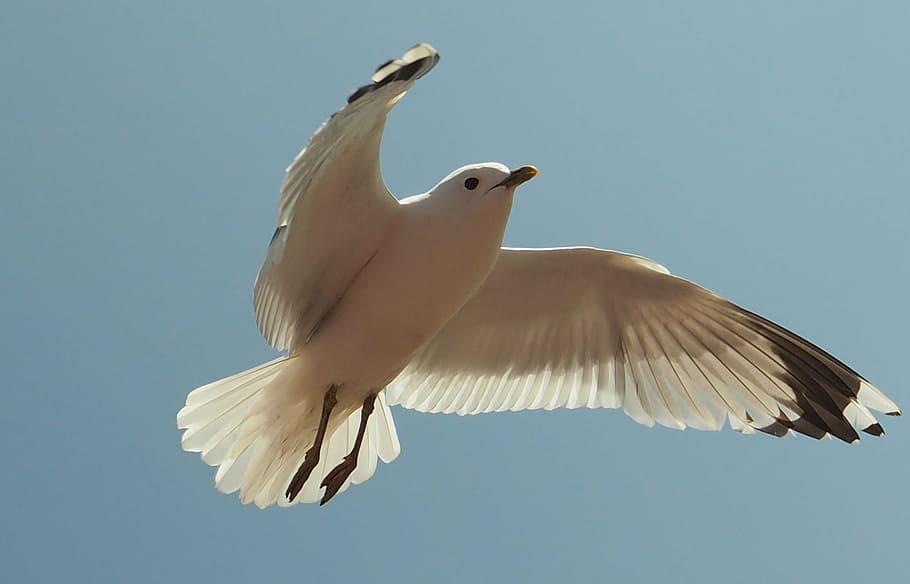 Uçamayan Kuşlar Hangileri?