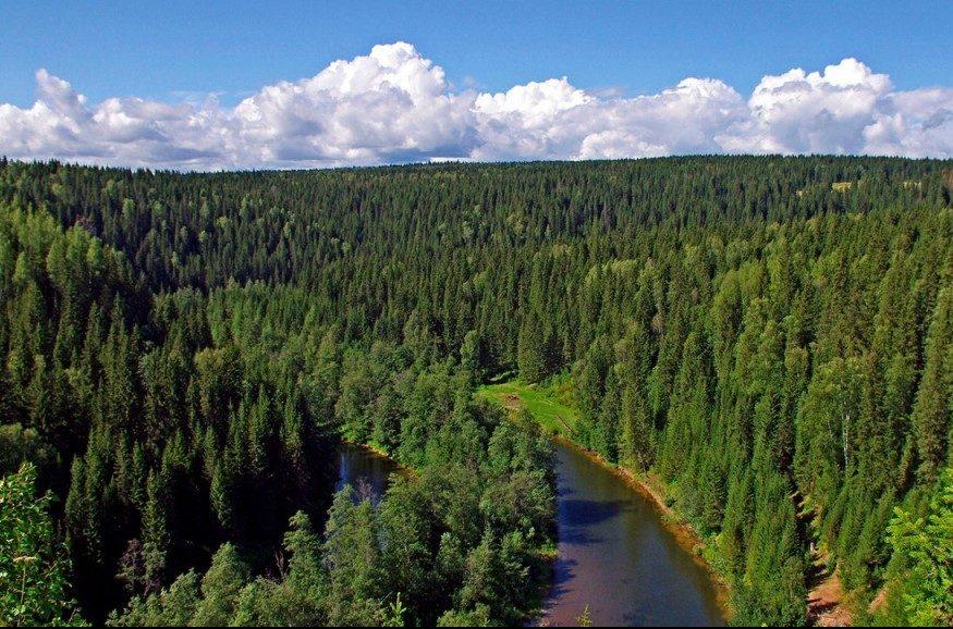 Tayga Ormanları Nerede?